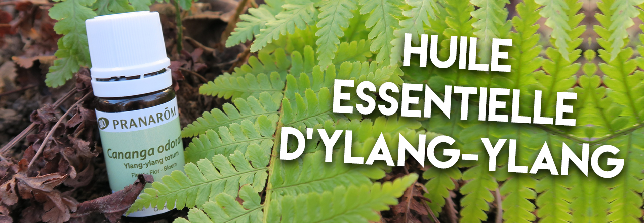 Lhuile essentielle dylang ylang